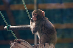 Kleiner lustiger Affe Lizenzfreie Stockfotografie