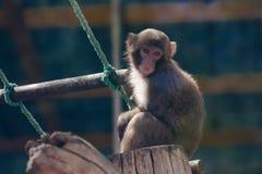 Kleiner lustiger Affe Stockbild