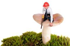 Kleiner Mann schneidet einen Pilz stockbild
