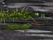 Kleiner Moss World auf Holz Stockfotografie