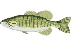 Kleiner Mund Bass Illustration lizenzfreie abbildung