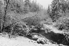 Kleiner Nebenfluss in den weißen Niederlassungen des Schneesturms lizenzfreie stockbilder