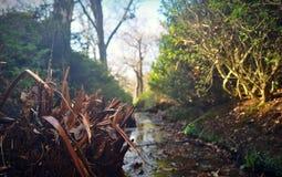 Kleiner Nebenfluss im Richmond-Park stockbilder