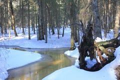 Kleiner Nebenfluss im Winter-Wald stockfoto
