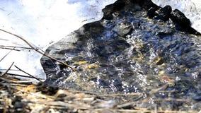 Kleiner Nebenfluss mit Eis stock footage