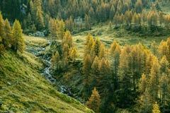 Kleiner Nebenfluss mit Lärchen (Nord-Italien) Lizenzfreie Stockfotos