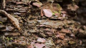 Kleiner Nebenfluss stellt diesen Wald dar stock video footage