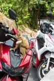 Kleiner netter Affe frech auf einem Motorrad Stockfotos
