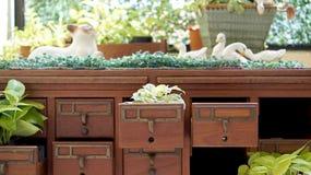 Kleiner netter grüner Innengarten dekorativ lizenzfreie stockbilder