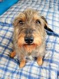Kleiner netter Hund Lizenzfreies Stockfoto