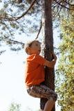 Kleiner netter Junge, der auf Baum klettert Stockbild