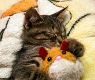Kleiner netter Kätzchenschlaf, der Plüschspielzeug umarmt Lizenzfreies Stockfoto