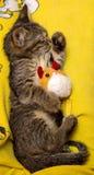 Kleiner netter Kätzchenschlaf, der Plüschspielzeug umarmt Lizenzfreie Stockfotografie