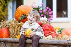 Kleiner netter Kinderjunge, der mit verschiedenen Kürbisen auf Halloween sitzt Lizenzfreies Stockfoto
