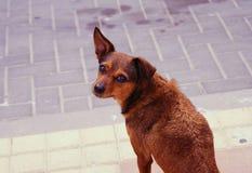 Kleiner netter Welpe sitzt auf der Straße Lizenzfreie Stockfotos