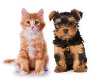Kleiner netter Welpe und rotes Kätzchen getrennt auf Weiß Lizenzfreie Stockfotografie