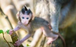 Kleiner neugeborener Affe Lizenzfreies Stockbild