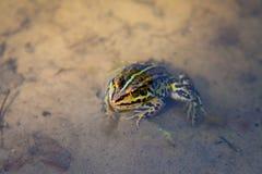 Kleiner neugieriger Frosch Stockbilder