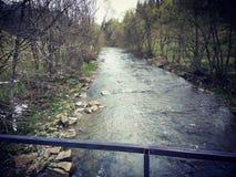 Kleiner nicht tiefer Gebirgsfluss mit Bäumen auf Ufern Lizenzfreie Stockfotografie