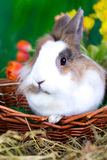 Tiny Easter Bunny Stock Images