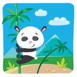 Kleiner Panda auf Bambus Stockbilder