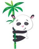 Kleiner Panda auf Bambus Stockfotos