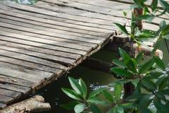 Kleiner Pier Going heraus zum Mangrovenwald, es betrachtend und ihm Frieden und Entspannung gebend ist ein Platz, zum sich zu ent stockfotos