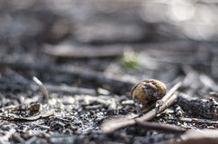 Kleiner Pilz Stockfotos