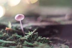 Kleiner Pilz auf einem Stumpfmakro im Wald lizenzfreie stockbilder