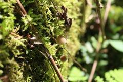 Kleiner Pilz, der im grünen Moos wächst Lizenzfreie Stockbilder