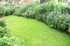 Kleiner Rasen stockfotografie