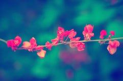 Kleiner rosa Blume abstarct Pastellhintergrund Lizenzfreies Stockfoto