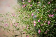Kleiner rosa Blumenhintergrund Stockfoto