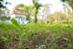 Kleiner Sämling, der auf unscharfem Parkhintergrund wächst stockfotos