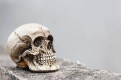 Kleiner Schädel auf Zementwand Stockfoto