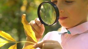 Kleiner Schüler, der Struktur des gelben Blattes mit Lupe, Abschluss oben lernt stock video