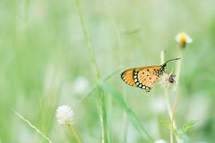 Kleiner Schmetterling Stockbild