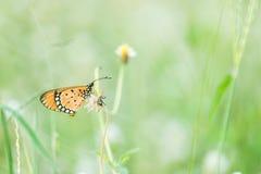 Kleiner Schmetterling Stockbilder