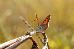 Kleiner Schmetterling auf der Herbststimmung Lizenzfreies Stockbild