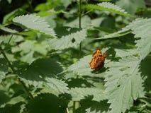 Kleiner Schmetterling, der auf einem Blatt sitzt Lizenzfreies Stockbild
