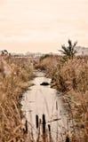 Kleiner schmutziger Fluss überwältigt mit den Schilfen verunreinigt mit Abfall Lizenzfreies Stockbild