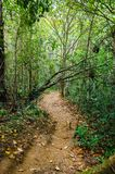 Kleiner Schotterweg in den Walda gefallenen Baum mitten in der Straße stockbilder