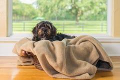 Kleiner schwarzer Hund, der auf Decke liegt Lizenzfreie Stockbilder