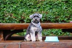Kleiner schwarzer Hund, der auf der Bank mit blauer Schüssel sitzt Stockbild