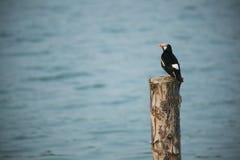 Kleiner schwarzer Vogel auf dem toten Baum Stockfoto