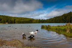 Kleiner See rief Sao Bras an Umgeben durch den grünen Wald, gelegen stockfotos