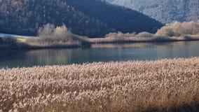 Kleiner See umgeben durch allgemeines Schilf Lizenzfreie Stockfotos