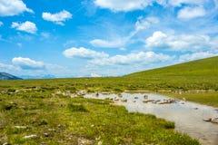 Kleiner See und grünes Gras Lizenzfreies Stockfoto
