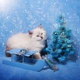 Kleiner sibirischer Kätzchen- und Weihnachtsbaum im Schnee Stockbild