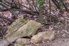 Kleiner Spatz, der auf dem Stein im Herbstwald, WarteLebensmittel sitzt Abstrakte Abbildung Lizenzfreies Stockfoto